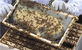 Seaport's apiary produces hundreds of pounds of honey each year for use at the hotel