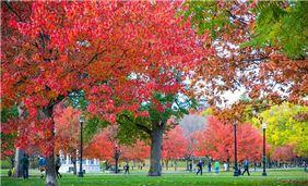 Boston Common foliage - photo courtesy of Kyle Klein/GBCVB