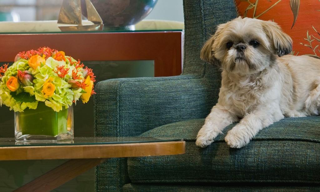 Seaport Hotel & World Trade Center, Boston offers Pet Friendly accommodations