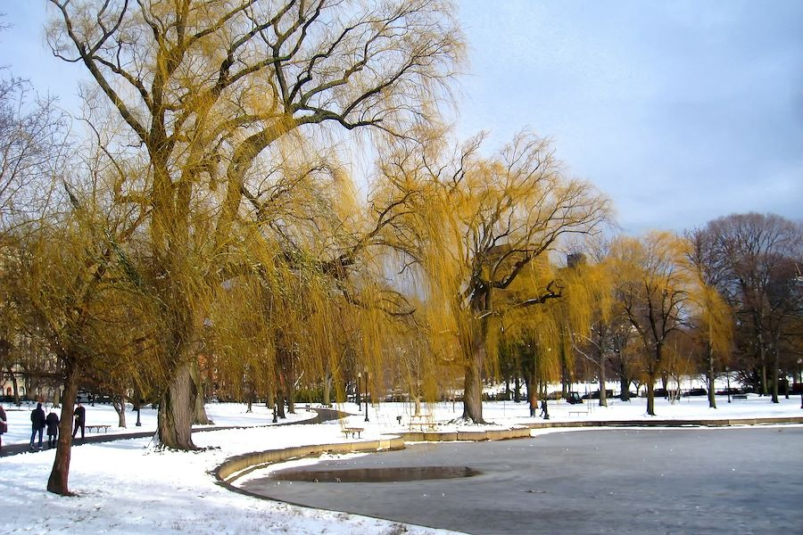 Winter Fun in Boston!