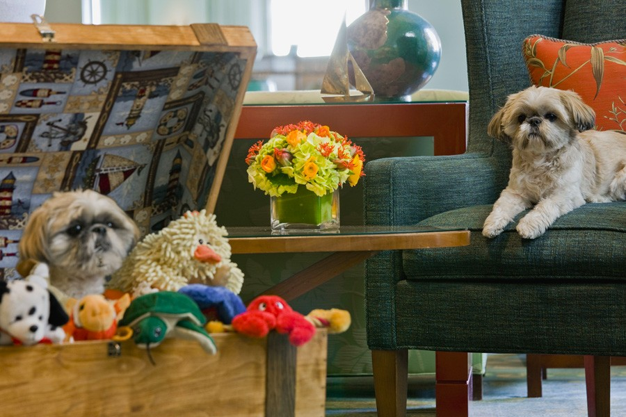 Seaport Hotel offers Pet Friendly accommodations